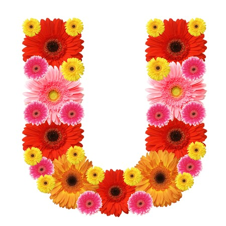 gerber flowers isolated on: U, flower alphabet isolated on white Stock Photo