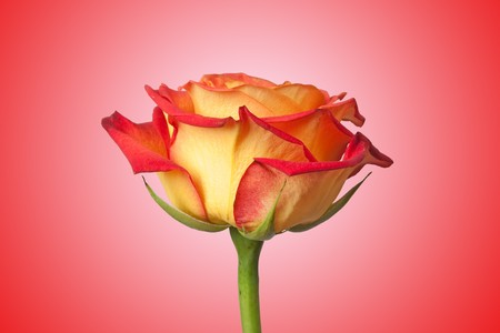 single mom: rose