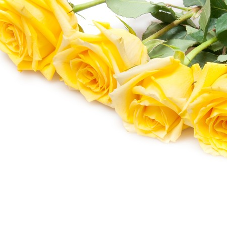 yellow roses isolated on white