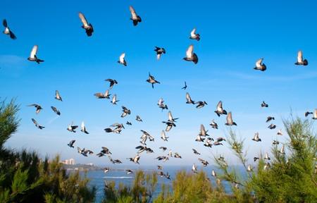 pigeons on blue sky photo