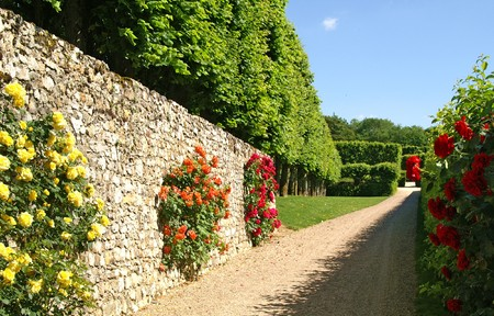 hedge plant: roses in Villandry, France