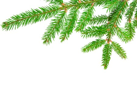 green banch of fir isolated on white Standard-Bild