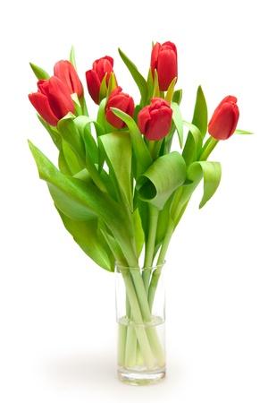 tulips isolated on white photo