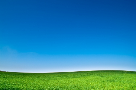 field and sky: beautiful landscape, clean blue sky