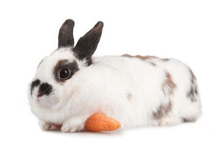lapin blanc: lapin blanc avec des taches blask