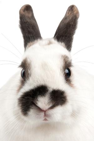 white rabbit with blask spots Stock Photo - 8933843