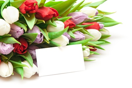 bouquet of tulips isolated on white photo