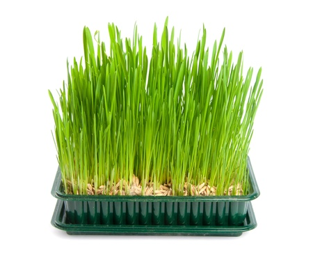 green grass isolated on white Stock Photo - 9342280