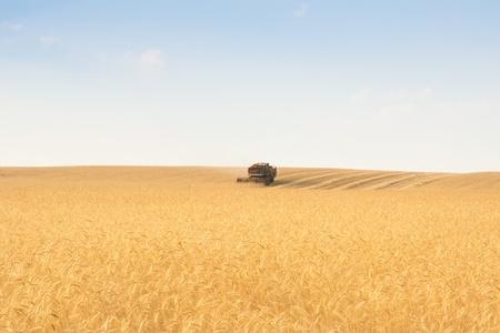 grain harvester combine work in field photo
