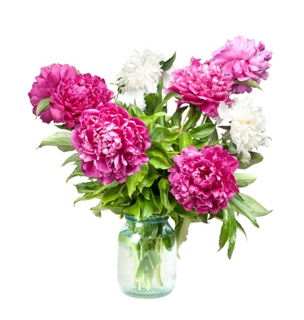 peonies isolated on white photo