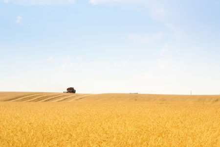 grain harvester combine work in field Stock Photo - 9719584