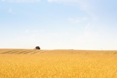 grain harvester combine work in field Stock Photo - 9719584