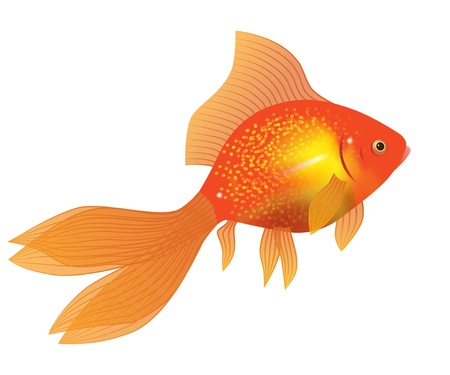 gold fish on white Vector