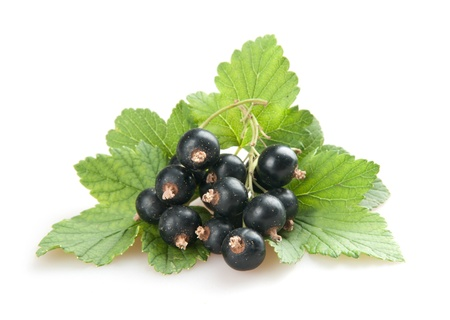 blackcurrant isoalted on white Stock Photo