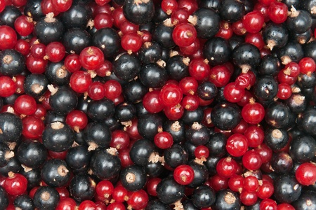 mix of redcurrant and  blackcurrant Stock Photo - 9983392