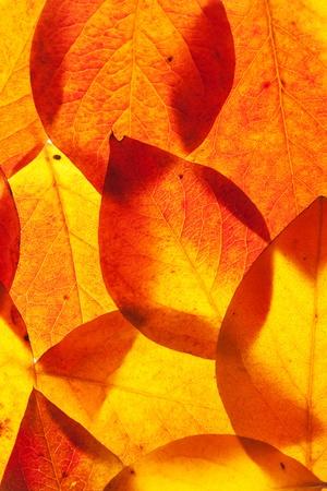 szeptember: sárga és vörös levelek háttér Stock fotó