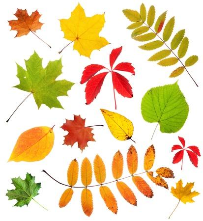 Verschiedene Blätter auf weißem Hintergrund Standard-Bild - 10474590