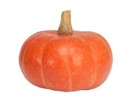orange pumpkin isolated on white photo