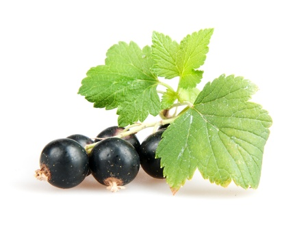 ribes: blackcurrant isoalted on white Stock Photo