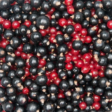mix of redcurrant and  blackcurrant Stock Photo - 10615539