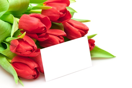 bouquet of red tulips isolated on white photo