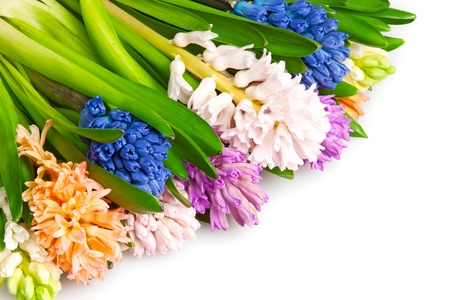 many  different color hyacinth, flowers photo