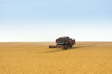 grain harvester combine work in field  Stock Photo - 13012180