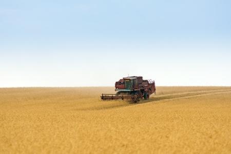 grain harvester combine work in field Stock Photo - 13012180