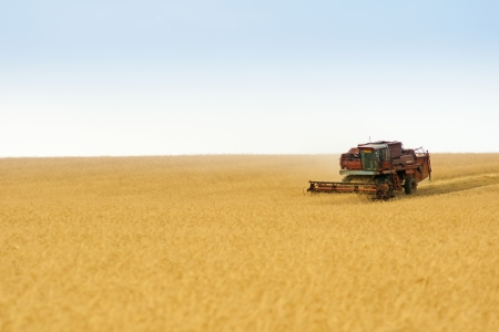 grain harvester combine work in field  Stock Photo - 14376288