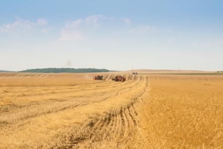 grain harvester combine work in field  Stock Photo - 14379345
