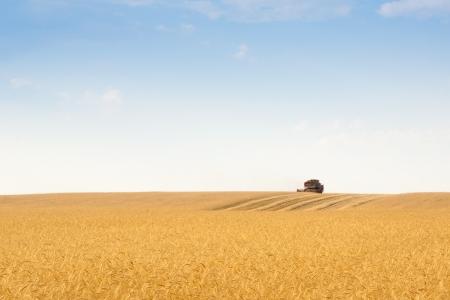 grain harvester combine work in field Stock Photo - 14744556