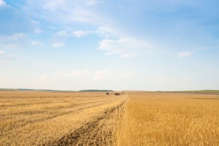 grain harvester combine work in field Stock Photo - 14744579