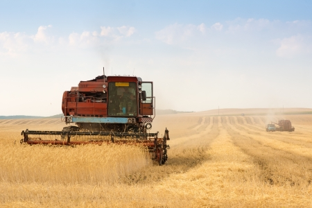 grain harvester combine work in field  Stock Photo - 14744572