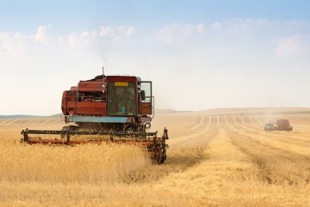 grain harvester combine work in field Stock Photo - 14744572