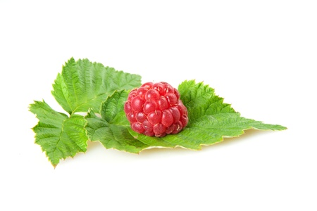raspberry with green leaf photo