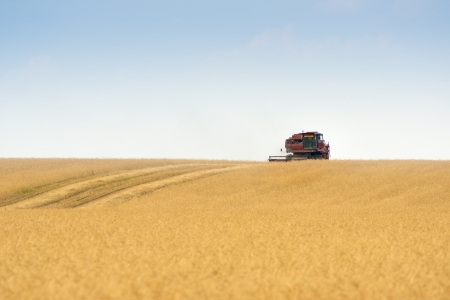 grain harvester combine work in field Stock Photo - 15068787