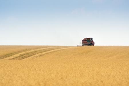 grain harvester combine work in field Stock Photo - 15068787