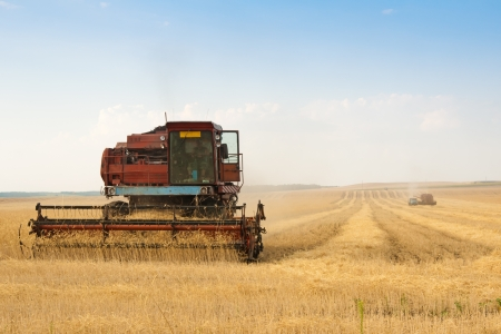 grain harvester combine work in field  photo