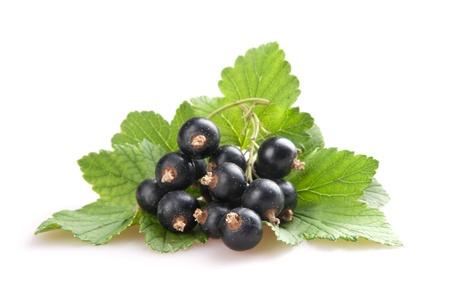 blackcurrant isoalted on white photo