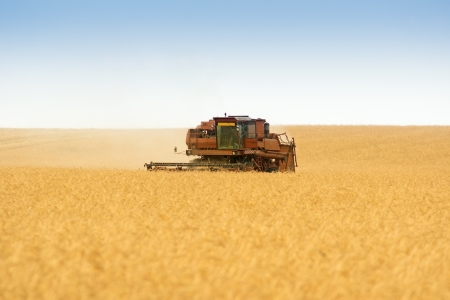 grain harvester combine work in field  Stock Photo - 15781366