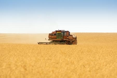 grain harvester combine work in field Stock Photo - 15781366