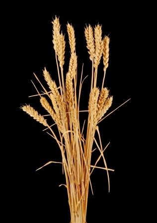 wisp: wisp of wheat