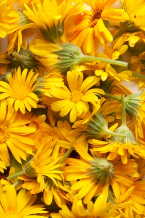 marigold, background Stock Photo - 17411216