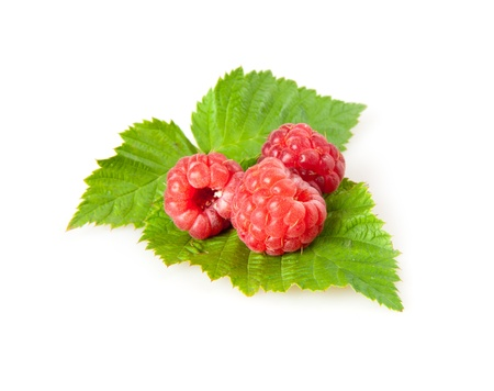 raspberries isolated on white photo