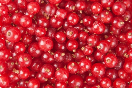 redcurrant: redcurrant background Stock Photo