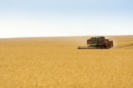 grain harvester combine work in field
