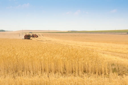 grain harvester combine work in field  Stock Photo - 17402922