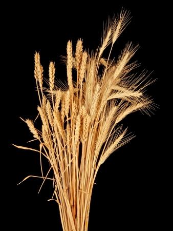 wisp: sliert van tarwe en rogge