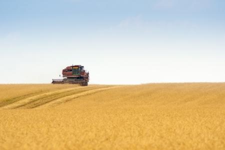 grain harvester combine work in field  Stock Photo - 18238767