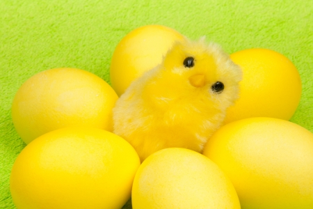 yellow chicken with yellow eggs photo